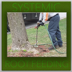 SYSTEMIC-DEEP-ROOT- tree service fort worth