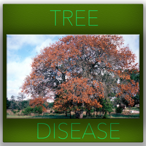 TREE-DISEASE - tree service fort worth