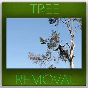 removing my tree - tree service fort worth