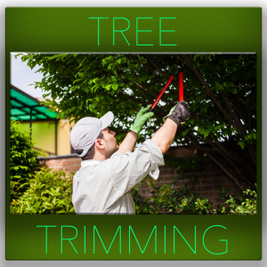 Tree-trimming--