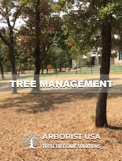 We provide Tree Management for your shrubs, trees, and more.