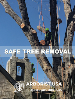 We provide safe tree removal in Fort Worth, Texas.