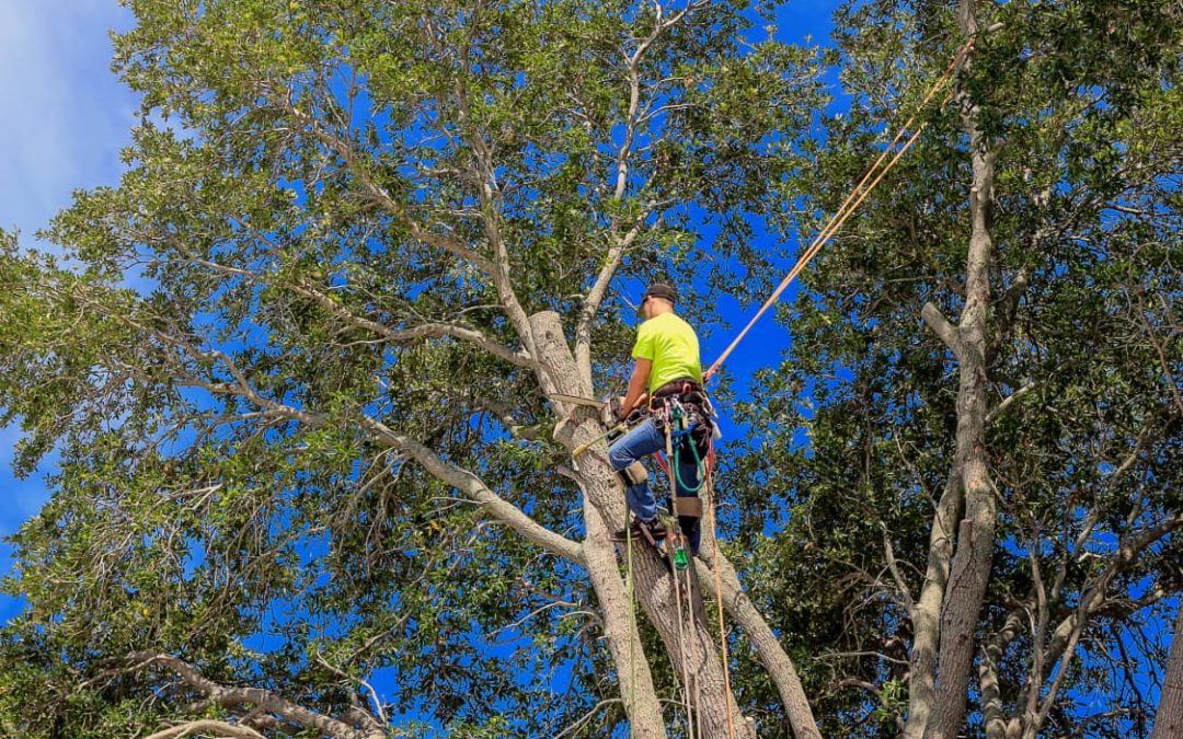 Best Time To Prune Trees (Including Oak Trees)